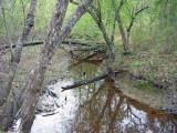 Woodland Stream in Unit 35