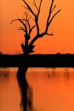 Loch Luna Reserve Sunset_3.jpg