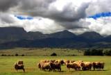 Flinders Ranges Farming.jpg