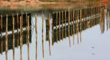 Port Augusta Reflections2.jpg