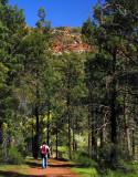 Saint Marys Peak Track.jpg