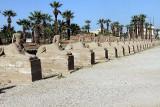 Luxor_10_032.jpg