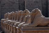 Luxor_10_139.jpg