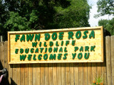 Fawn Doe Rosa