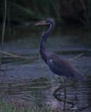 Florida 1998