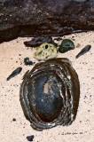 Turtle Melt