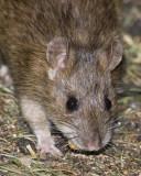 Mice & Moles