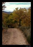 Camino otoñal