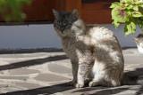 The dominant tomcat