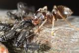 Gallery: Bugs