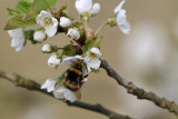 Gallery: Bees, Bumblebees, and Wasps