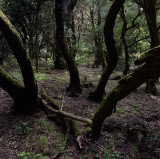The forest at Las Cresces