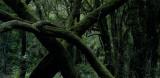 Forest near Laguna Grande