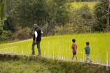 The Rice Terraces of Ifugao