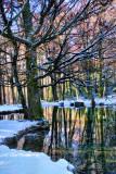 The Fairies' Pond 63