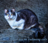 There are no ordinary cats....