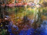 The Fairies' Pond 43