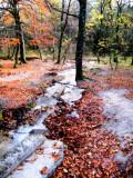 The Fairies' Pond 42