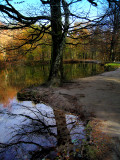 The Fairies' Pond 41