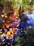 The Fairies' Pond 44