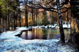 The Fairies' Pond 50