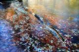 The Fairies' Pond 51