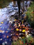 The Fairies' Pond 54