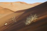 inside the dunes