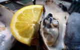 taste of oyster