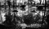flooded park in b&w