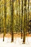Lichte bomen