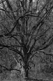 Tree at Schlosspark Putbus
