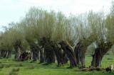 Trees at Middelhagen