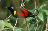Irian Jaya/West Papua 2008