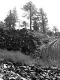 Mammoth Lakes, July 2008