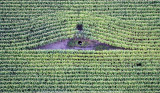'Bird's eye view' van het Kempisch landschap - Weilanden en akkers