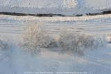 2009-01-10_362.jpg