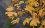 kwt_2008-09-30_133.jpg