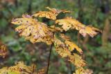 kwt_2008-10-03_141.jpg