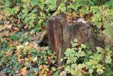 kwt_2008-10-03_158.jpg