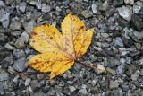 kwt_2008-10-03_187.jpg
