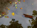 premières feuilles mortes