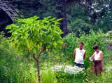 le jeune arbuste
