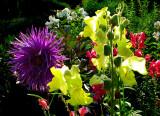 multicouleurs du jardin