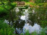 reflet  d'étang