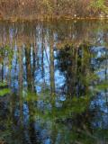 le reflet dans l'étang
