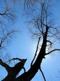 Dessin de branches