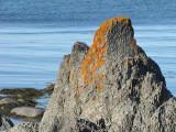 mont de lichens