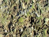 photo satellite