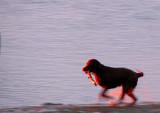 At dog speed